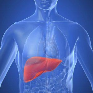 fegato-anatomia-funzioni-malattie